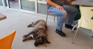 Taksiciler Sokak Köpeklerine Sahip Çıktı, Vatandaşlar Şikayetçi Oldu