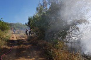 Gemlik'te Orman Yangını, 20 Dönüm Ağaç Kül Oldu