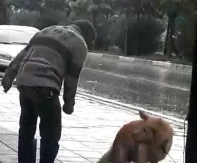 Gemlik'te Yağmur altında ağaca bağlanan köpeği böyle yumrukladı