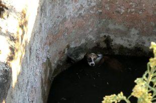 Sulama havuzuna düşen köpek böyle kurtarıldı