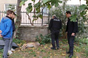 Okul Bahçesinde Köpek Bıçaklandı