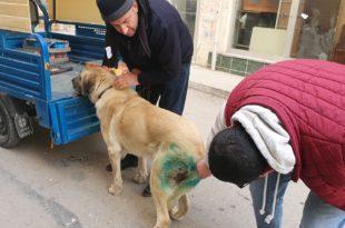 Vurulan köpek sağlığına kavuşuyor