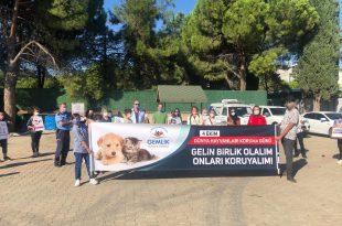 Gençlik Merkezi 4 Ekim Dünya Hayvanları Koruma Günü nedeniyle bir dizi etkinlik gerçekleştiriyor