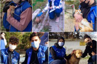 Gençlerin Sokak Hayvanları Sevgisi