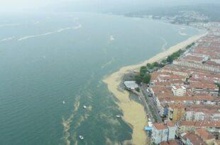Gemlik Körfezi'ndeki salya istilası havadan görüntülendi
