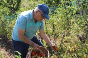 Gemlik'te organik tarım meyvelerini verdi