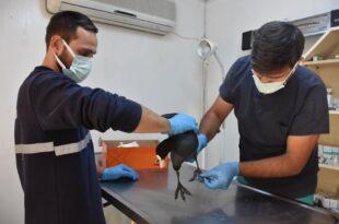 Yaralı yabani kuşa Gemlik Belediyesi sahip çıktı