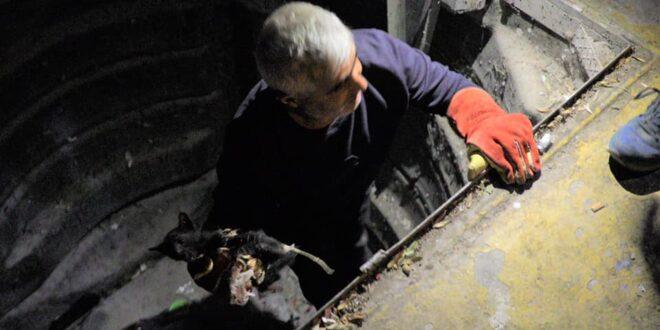Çöpe atıldığı iddia edilen kediyi belediye kurtardı